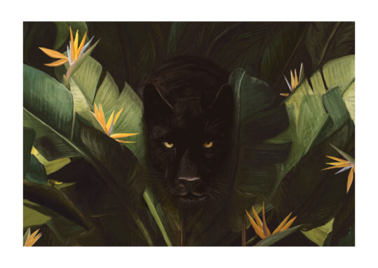 - Florent Bodart PosterHello Panther - Florent Bodart Poster 1