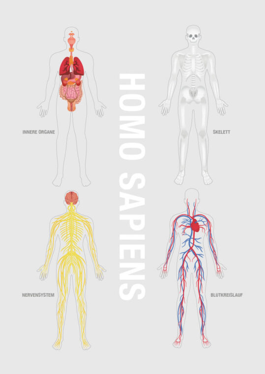 Poster Homo Sapiens Poster 1